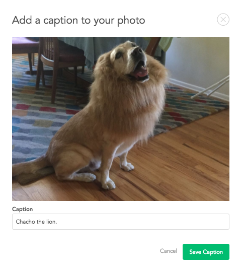 Add_caption_to_your_photo.png